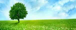 污染场地调查与修复评估技术...